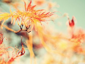 安卓风景 花 花卉 春天 春意盎然手机壁纸