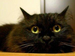 安卓萌宠 喵星人 可爱 宠物 卖萌 憨态百出 古灵精怪 猫手机壁纸