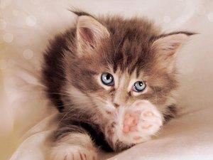 安卓萌宠 喵星人 卖萌 古灵精怪 猫 可爱 宠物 搞笑图 憨态百出手机壁纸