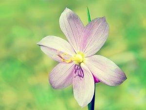 安卓清新 植物 浪漫手机壁纸