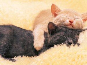 安卓萌宠 动物 可爱 萌物 宠物 喵星人 猫 睡觉中 搞笑图 卖萌图 儿童桌面专用手机壁纸