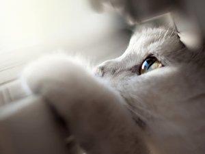 安卓萌宠 动物 可爱 宠物 喵星人 卖萌图手机壁纸