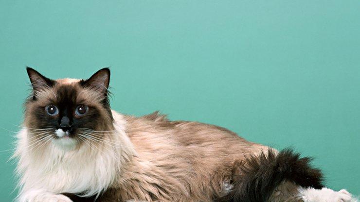 壁纸 动物 猫 猫咪 小猫 桌面 740_416