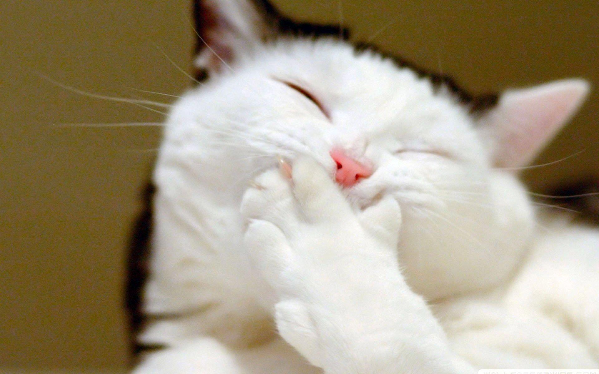 android安卓萌宠 动物 可爱 儿童桌面专用 宠物 喵星