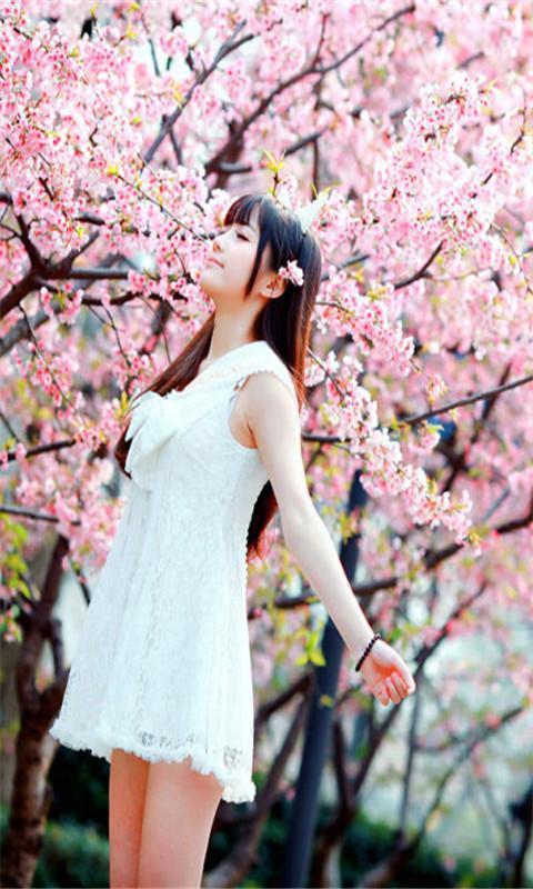 樱花树下恬静的美女高清动态壁纸
