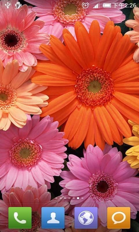 清新花朵动态壁纸