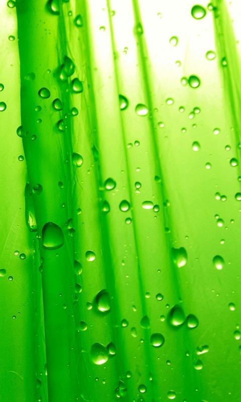 绿色护眼动态主题壁纸