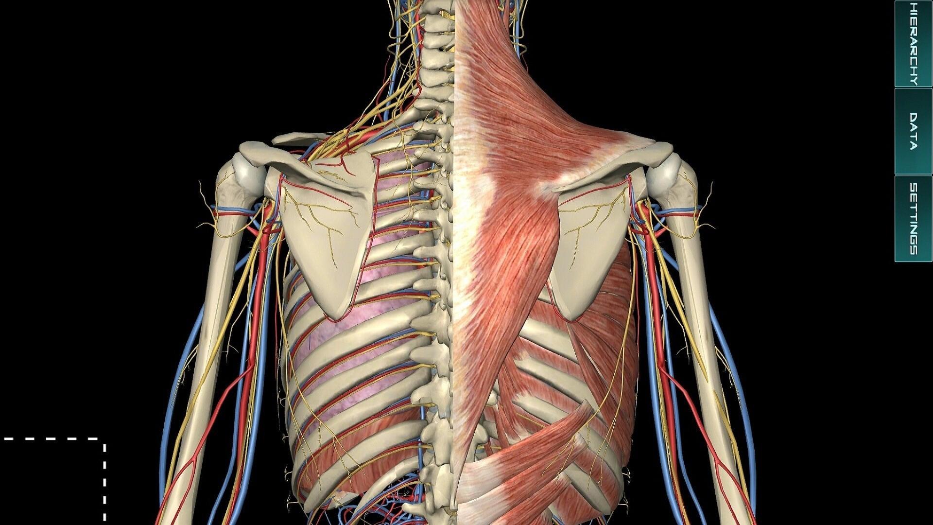 3d脊柱解剖结构图解