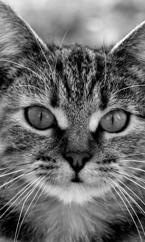呆滞可爱的宠物-桌面壁纸